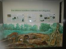 Developing native species museum exhibits.