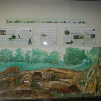 Developing native species museum exhibits.